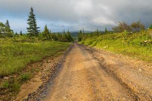 grus- och grusväg genom en skog foto