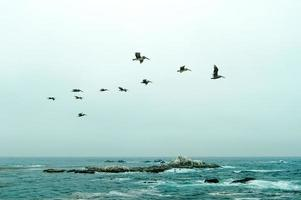 pelikaner över havet foto