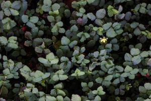 gröna blad och spirande blommor foto