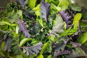 färska gröna sallader