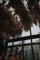 torkade bruna blad foto