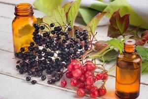 fläderbär, viburnum, mediciner. foto