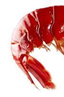 fin röd kräftdjur svans mot vit foto
