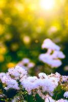 vita vilda blommor foto