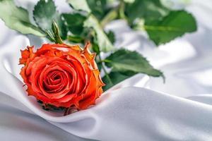 röd rosblomma på mjuk satin. foto