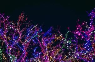 träd täckta av färgglada strängljus på natten foto