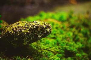närbild av en grön och brun orm foto