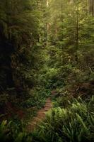 träväg mitt i gröna träd foto