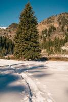 grönt träd och snöig landskap foto
