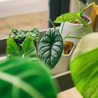 grön lövad krukväxt foto