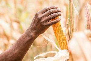 person som håller majs