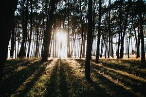 vissa träd solas under sommaren foto
