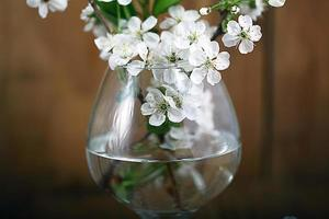 körsbärsblommor och kvistar på träbakgrund foto