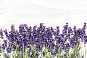 lavendel blommor över vit trä textur bakgrund foto