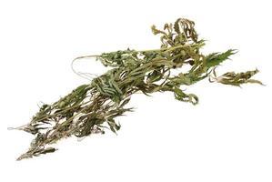torkad hampa (cannabis) foto