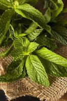 ekologiskt grönt myntablad foto