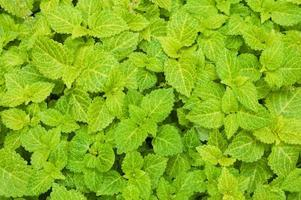 smaragdgrönt gräs täcka foto