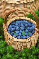 mogna saftiga blåbär och kaprifol foto