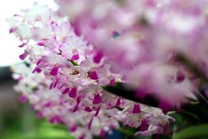 orkide foto