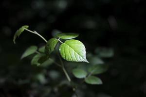 grönt blad i skogen med solljusljus foto