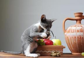 katt som leker foto