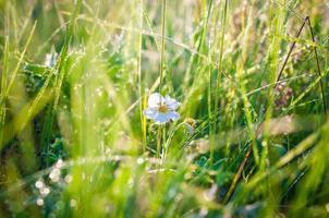 dagg på gräs foto