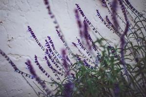 selektiv inriktning av lila blommor