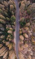 fågelperspektiv över en väg i skogen