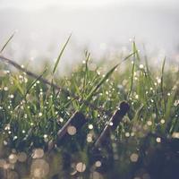 gräs med dagg foto