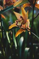 gul petaled blomma