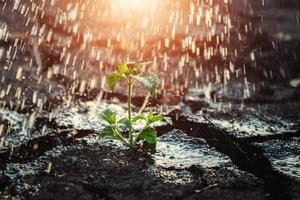 solbelyst växt under regnet