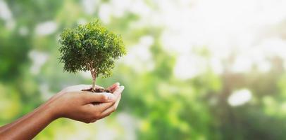 hand som håller ett litet träd foto