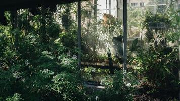 solbelyst botanisk trädgård foto