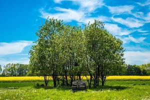 träd på ett grönt fält foto
