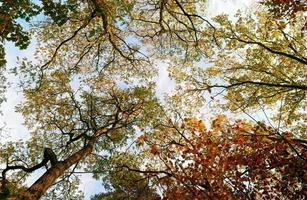 låg vinkel syn på skogsträd