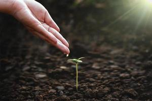 näring och vattning av plantor foto