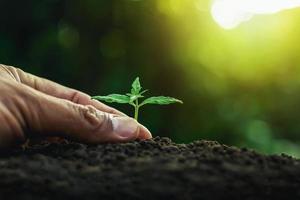 plantera en grodd foto