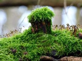 mossa växer på trädstammen foto