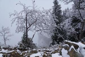 snötäckta träd foto