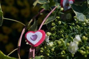 hjärta, kärlek, växt, strauss, tinker, sten, tyg foto