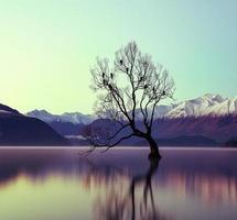 reflektion av träd i sjön
