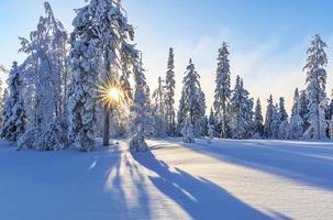 vinterlandskap med snö och träd