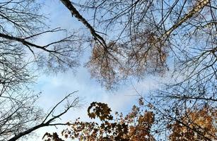 skogsträd på senhösten
