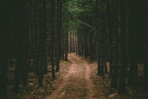 stig i en skog foto