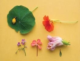 diverse blommor och kronblad foto
