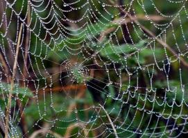 närbild av regndroppar på en spindelnät