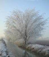 snötäckt träd foto