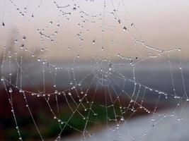 närbild av en spindelnät med daggdroppar