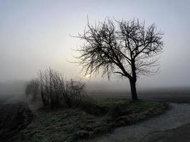 soluppgång i ett dimmigt vinterlandskap foto
