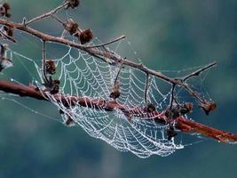 närbild av en spindelnät på en gren